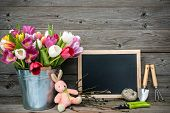 Tulips in a metal bucket with gardening tools against wooden background