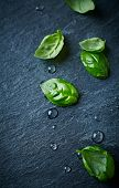 Fresh basil leaves on black slate