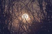 Moon thru the forest