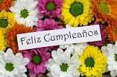 Feliz cumpleanos (which means happy birthday in Spanish) card with colorful santini flowers