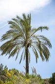 Palm Tree Against The Blue Sky In Summer