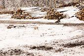 stacks of lumber in winter landscape