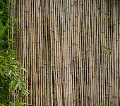 pic of dingy  - bamboo background - JPG
