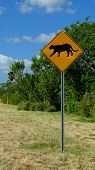 image of panther  - Sign warning drivers  on possible panther crossing in south Florida - JPG