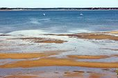 pic of cape-cod  - Bay water and grass in Welfleet Cape Cod - JPG