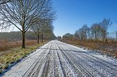 foto of row trees  - Row of trees along a snowy road in winter - JPG