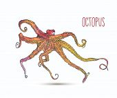 Vector illustration with octopus