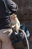 Monkey's Curiosity