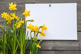 foto of daffodils  - Message and spring daffodils against wooden background - JPG