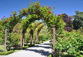 image of species  - Lady Norwood Rose Gardens in Christchurch Botanical Gardens New Zealand is the home of this rose arch established in 1868 the garden mixes native forest with planted species - JPG