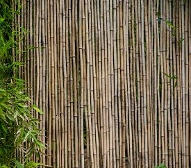 picture of bamboo  - bamboo background - JPG
