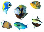 foto of angelfish  - Tropical fish isolated on white - JPG