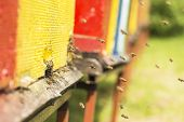 picture of beehive  - The bee was sipping the nectar and returning to beehive - JPG