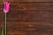 pic of bittersweet  - Pink tulip flower on old wooden table background - JPG