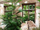 stock photo of abandoned house  - Abandoned house closeup was overgrown with bushes and trees - JPG