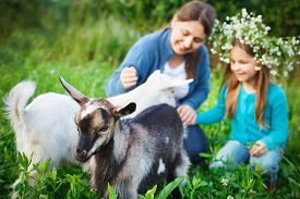 stock photo of baby goat  - Happy mother and her daughter with baby goats on the countryside  - JPG