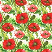 Постер, плакат: Red Poppies Watercolor Illustration