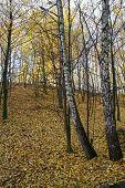Road - Autumn Landscape