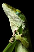 picture of night crawler  - Lizard sleeping - JPG