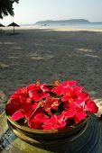 Malvaceae hibiscos en una playa