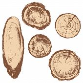 ������, ������: Cross Section Of Tree Trunk Set