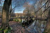 Frankfurter Stadtwald und Brücke