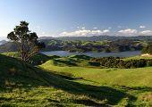 Rolling Green Pastures, New Zealand