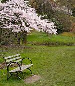 Park In Springtime