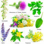 Set Of Medicative Herb