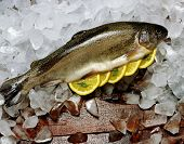Trout on bed of Ice