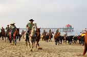 Orange County Fair 'Cowabunga Beach Cattle Drive', Huntington Beach, California (Corriente Steer)