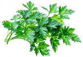 Bunch of parsley herb isolated on white background. poster