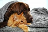 Adorable Cat And Dog Lying Under Plaid On Floor. Warm And Cozy Winter poster
