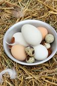 The Eggs In The Chicken Coop
