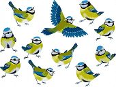 Flock of blue tits isolated over white background