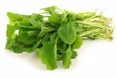 fresh turnip tops (turnip greens) on a white background