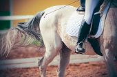 Beautiful Grey Horse With A Rider In The Saddle With A White Saddle Cloth Runs Gallop On The Sandy A poster