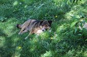 Cute Stray Dog In The Thickets Of Weeds poster