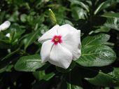 A Flower In A Garden