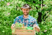 Garden Care. Mature Farmer Man Planting Plants. Planting Season. Bearded Gardener Guy Hold Box With  poster