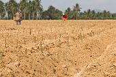 Cassava Planting