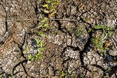 Cracked Soil And Green Grass. Ground Texture. Soil Background. Cracked Soil Ground. Dry Cracked Soil poster
