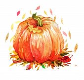Watercolor Pumpkin With Autumn Leaves, Watercolor Vegetables Pumpkin Isolated On White Background poster