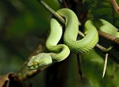 pic of garden snake  - Green snake in rain forest - JPG