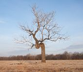 Crooked tree growing in an open field - concept of perseverance despite difficult conditions