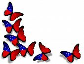 Samoa Flag Butterflies, Isolated On White Background