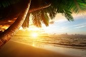 foto of caribbean  - sunrise on Caribbean beach - JPG