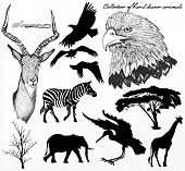 Collection Of High Detailed Hand Drawn Animals And Silhouettes Of Savanna For Design