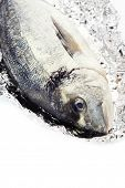 fresh dorada fish over white - food and drink