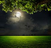 stock photo of halo  - Night and the moon on a green field - JPG